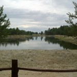 Łowisko Pod Sosnami