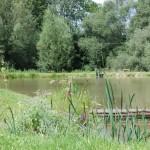 Łowisko Szuwar
